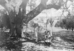 Swing under the large oak tree (camera looking east towards Shoal Creek) circa 1917